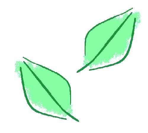 お茶(茶葉)イメージ